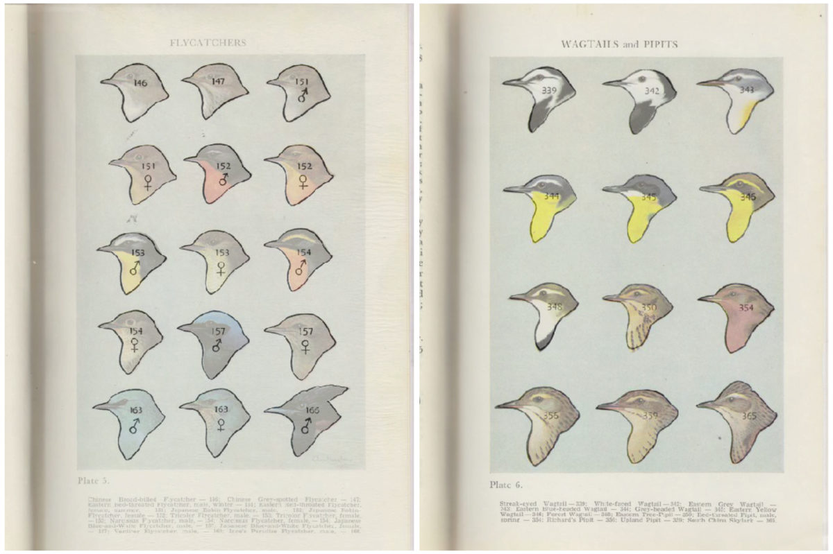 Birds of Hong Kong