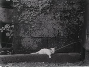 Directors Cat (Tito & Tita, 2013)