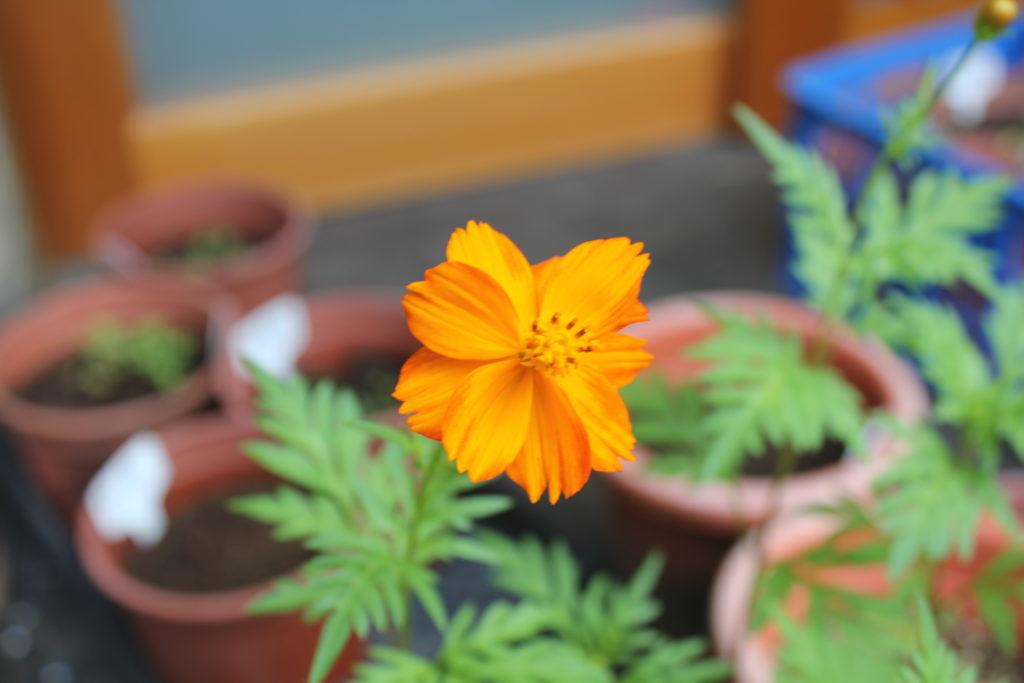A Planter's Art, Tsung Yeh garden