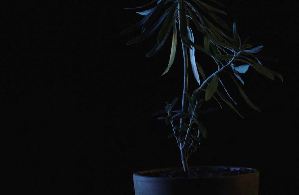 Untitled (Epilogue) (Shannon Te Ao, 2015)