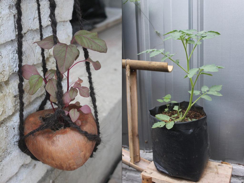 IMG_4515_plants combo sm